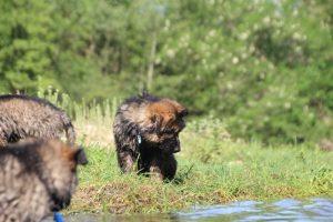 comme-chiens-et-loups0176