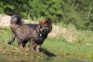 comme-chiens-et-loups0177
