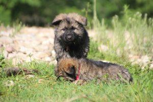 comme-chiens-et-loups0181