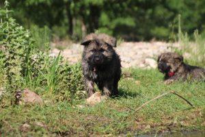 comme-chiens-et-loups0183