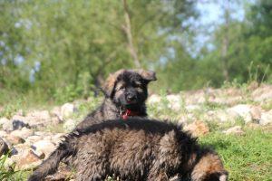 comme-chiens-et-loups0190