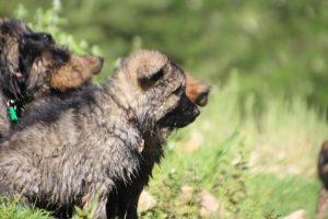 comme-chiens-et-loups0209
