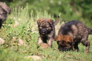 comme-chiens-et-loups0212