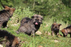 comme-chiens-et-loups0213