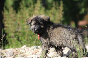 comme-chiens-et-loups0215
