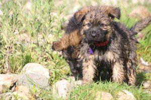 comme-chiens-et-loups0221