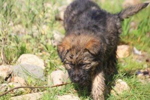 comme-chiens-et-loups0222