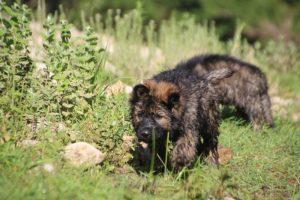 comme-chiens-et-loups0226