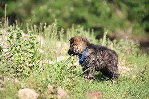 comme-chiens-et-loups0228