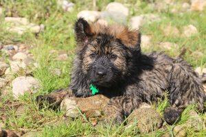 comme-chiens-et-loups0237