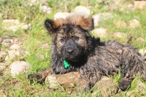 comme-chiens-et-loups0240