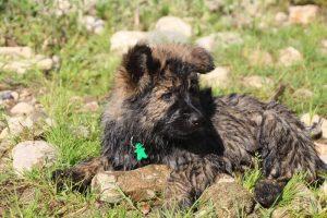 comme-chiens-et-loups0242